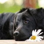 Hundepflegetipps für Einsteiger sind wichtig