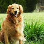 Mit dem Hund spazieren gehen, gehört zum Hundewissen