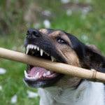 Optimale Zahnpflege für deinen Hund ist ein muss